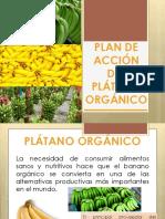 Plan de accion para el plátano