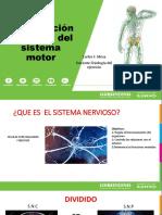 Control Nervioso Del Movimiento