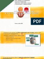 Embriologia de Cavidades Corporales