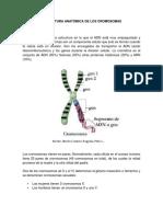 Estructura Anatómica de Los Cromosomas