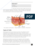 What-is-the-Epidermis.pdf