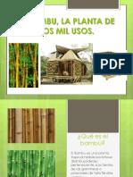 elbambulaplantadelosmil-130926215341-phpapp02
