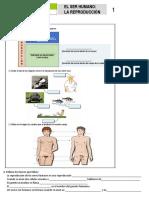 Taller Sistema Reproducción Humana