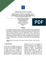 Informe Practica #2 Macromoleculas..