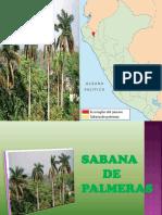 SABANA DE PALMERAS.docx.pptx