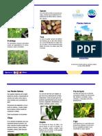 Trifoliar Plantas Nativas