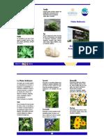 Trifoliar  Plantas Medicinales