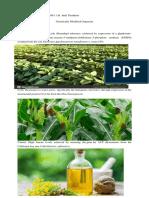 GMO 2.docx