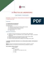 3a Práctica de Lab AyFI Articulaciones Tejido Muscular