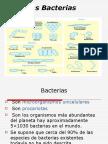 clases de bacterias