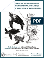 THE ECOLOGY OF THE GREEN TURTLE IN TEMPERATE WATERS