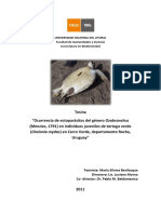 Ocurrencia de ectoparásitos del género Ozobranchus (Menzies, 1791) en individuos juveniles de tortuga verde