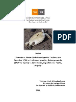 ectoparasitos tortugas