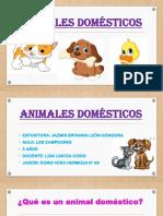 Animales Domésticos Brianna