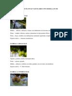 Identificacion de Plantas Vasculares Con Semilla en Mi Entorno