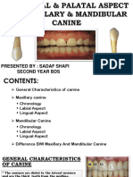Maxillary and mandibular canine