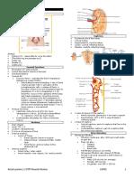 LEC15- RENAL SYSTEM.docx
