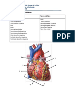 Guia Imágenes Cardiovascular PACE