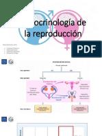 Endocrinología de la reproducción.pptx