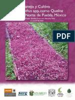 Manejo y Cultivo de Amaranthus Spp