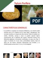 1. Porifera