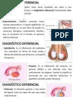 Diagnóstico Diferencial Cancer Testiculo