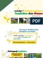 Sistem Perkembangbiakan Pada Tumbuhan Dan Hewan