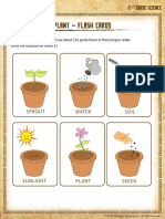 Life Cycle of a Plant Flash Cards
