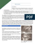 Traspasos - Clase 4-5 - Riñón y Páncreas