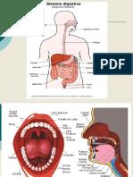 Biologia Sistema Digestivo