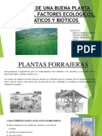 Plantas forrajeras