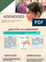 Adenoides n (1)
