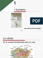 1.- El Cuerpo Humano (4)