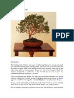 The World of Bonsai Trees