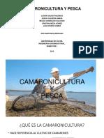 camaronicultura y pesca