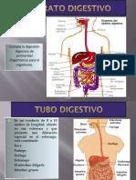 5.-APARATO DIGESTIVO