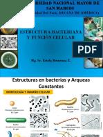 Estructuras en Bacterias