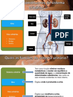 sistema urinário_completo_1819.pptx