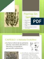 7. Plantas Sin Semillas (1)