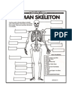 Activity 1, Skeletal System