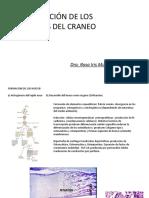 Clase Histología de Huesos Del Cráneo