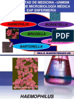 Haemop BordetellaBartonella y Gardnerella