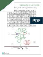 vocabulario-de-las-plantas.pdf