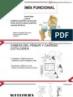 Biomecanica  de Cadera.
