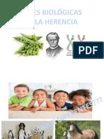 Bases de La Herencia