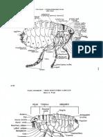 fleas.pdf