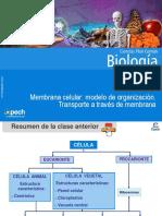 Clase 7 Membrana celular modelo de organización.Transporte a través de membrana 2015.ppt