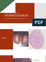 TUTORIAL 1 - SPERMATOGENESIS 2.pptx