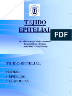 Hist 1 Epitelio