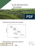 Manejo plantación forestal